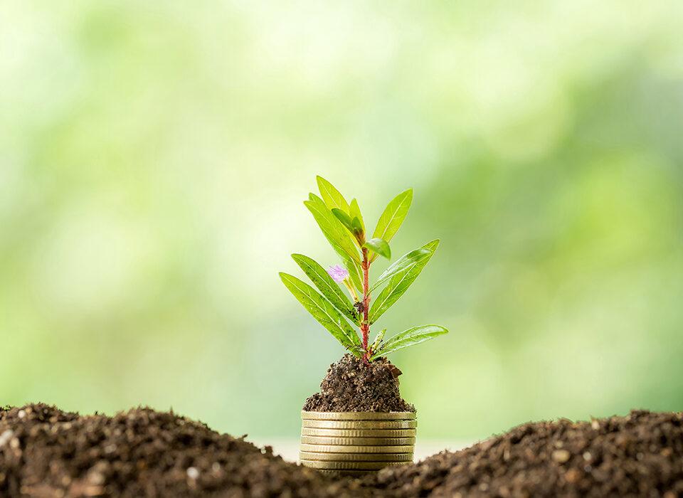 """""""plantando moedas"""""""